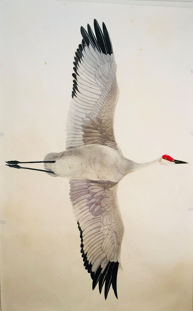Scott Kelley, Sand Hill Crane