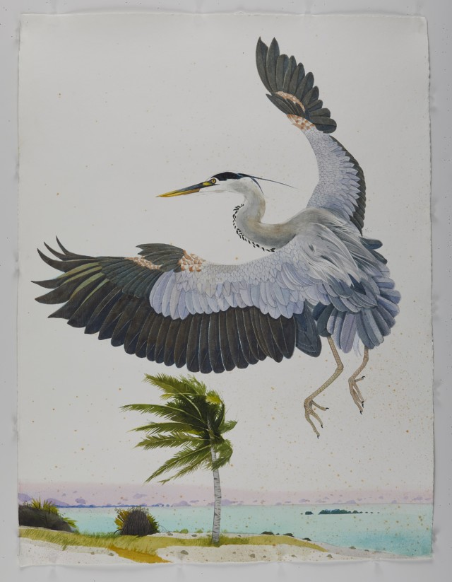 Palm Beach Great Blue Heron